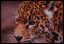 The leopard-like beast will force everybody to be implanted with a mark.